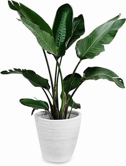 Plant Tropical Plants Indoors Pngjoy Transparent Nicepng
