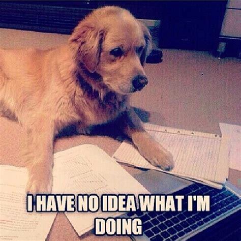 Funny Confused Memes - mathpics joke meme humor funny mathjoke mathmeme haha pun dog homework confused cute math funny