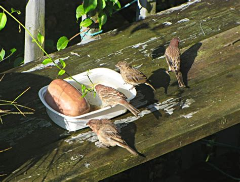 birds drinking water image search results