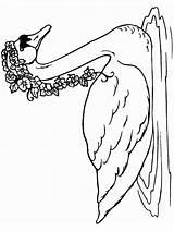 Coloring Swan Trumpeter Animals Swan2 Designlooter Drawings 957px 38kb Advertisement sketch template