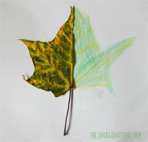 mirror leaf drawings nature art  imagination tree