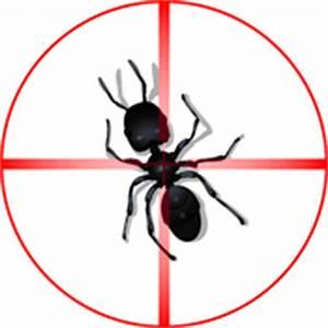 Anti Fourmi Naturel : pi ge fourmis types et prix ooreka ~ Carolinahurricanesstore.com Idées de Décoration