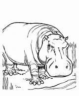 Hippo Coloring Printable Cartoon Face Coloringme Hippopotamus Dibujos Hipopotamos Template Sheet Imagenes Avengers Getdrawings Getcolorings sketch template