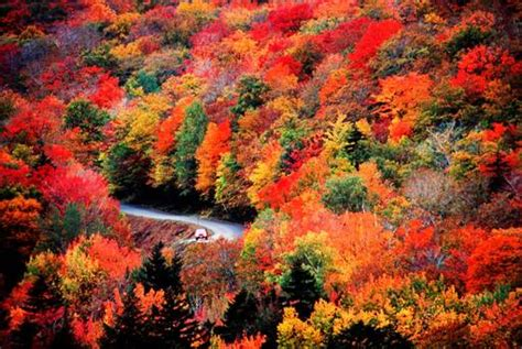 new s fall foliage the ultimate guide for