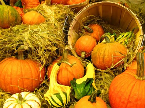 horn of plenty autumn harvest displays orange gourd