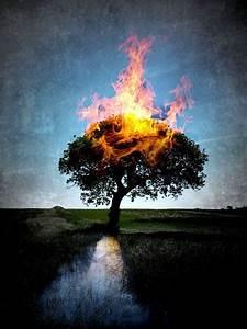 Burning, Tree