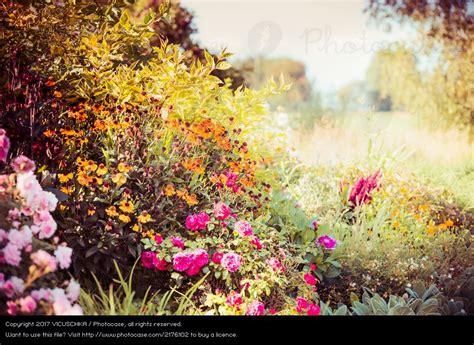 Herbst Blume Im Garten by Herbstblumen Bilder Kostenlos Herbst In Den Alpen