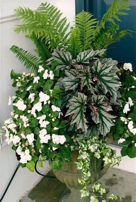 plante foug 232 re d ext 233 rieur culture entretien et