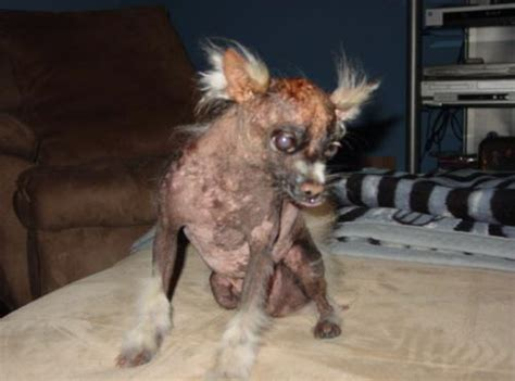 worlds ugliest dogs faithfully