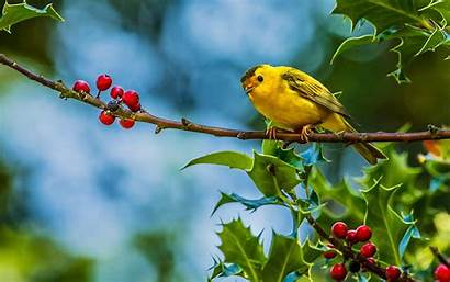 Birds Tree Branch Wallpapers
