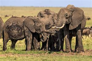 Endangered Species Day: More Endangered Animals Than Ever ...