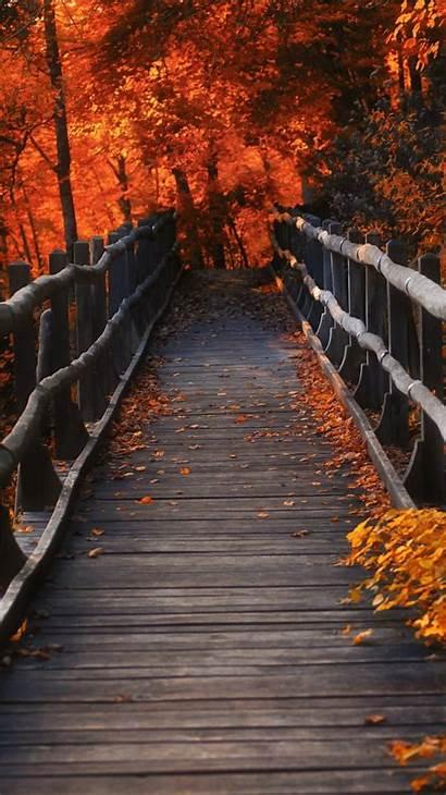 Autumn Nature Orange Brown 4k Trees Evening
