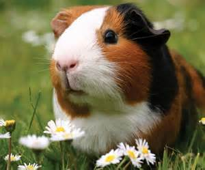 Small Animals as Pets