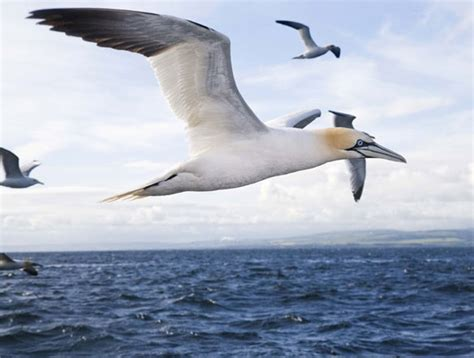 top 10 facts about migrating birds omg top tens list