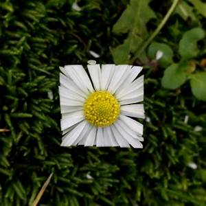 bake maeda 39 s square flower and leaf challenges nature