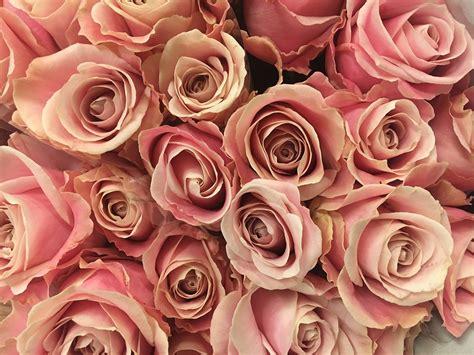 Rosa Blumen by Blume Blumen Rosa 183 Kostenloses Foto Auf Pixabay