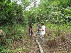 Jungle Nature Trekking  Kampung Gumbang To Pangkalan