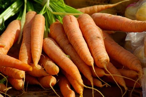 how to carrots from the garden free photo carrots vegetables free image on pixabay