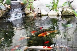 koi fish pond keep your koi pond water clean outdoortheme com