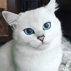 he cat coby the cat has the most beautiful in the universe