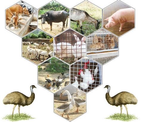 poultry animal husbandry animal husbandry wholesaler