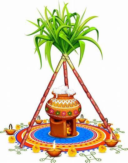 Pongal Pot Sugar Cane Clipart Tree Sankranthi
