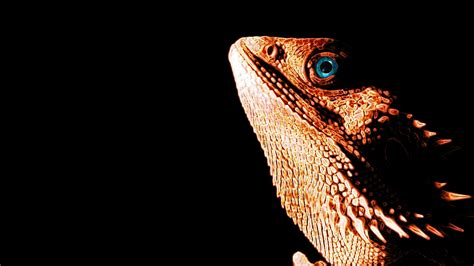 Check out this fantastic collection of eastern dragon wallpapers, with 40 eastern dragon background images for your desktop, phone or tablet. Bearded Dragon Wallpaper ·① WallpaperTag