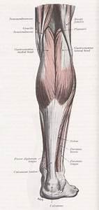 Three Bodies  Flesh  U0026 Bone  Gastrocnemius  U0026 The Sphenoid