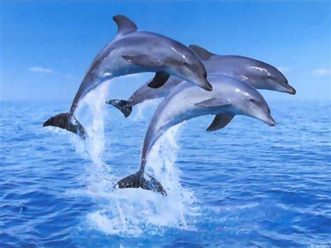 Water Animal Wallpaper - beautiful water animals wallpapers daertube