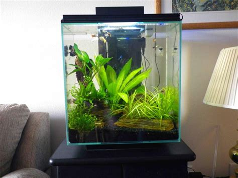 105 Best Images About Fluval Edge Inspiration On Pinterest