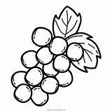 Coloring Grape Clipart Transparent Webstockreview Festooning Framing Contemporary sketch template