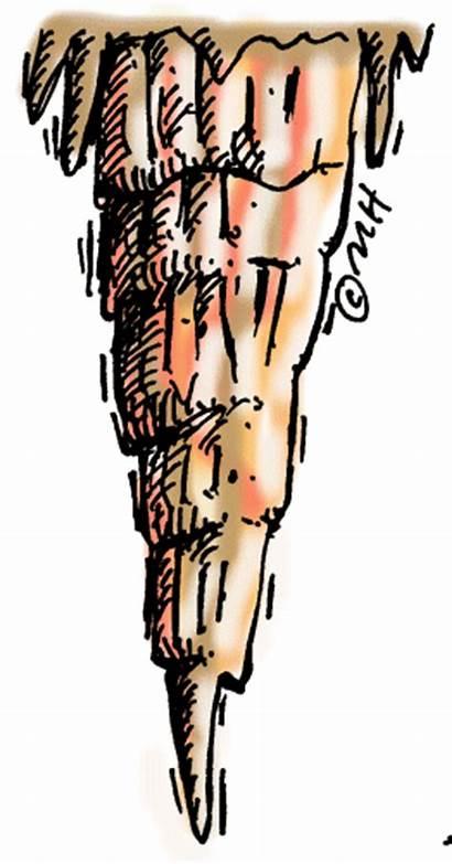 Stalagmite Clipart Rocks Clip Rockhound Rock Hound