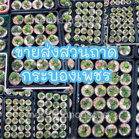 ขายส่งสวนถาดกระบองเพชร ขายส่งแคคตัส | Shopee Thailand