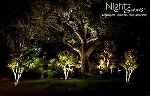 landscape lighting tropical landscape other metro With outdoor accent lighting for trees