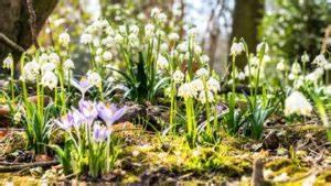 Wann Blühen Narzissen : berblick wann bl hen welche blumen ~ Eleganceandgraceweddings.com Haus und Dekorationen