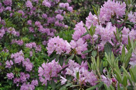Foto: Botāniskais dārzs pārsteidz ar ziedošo augu krāšņumu ...