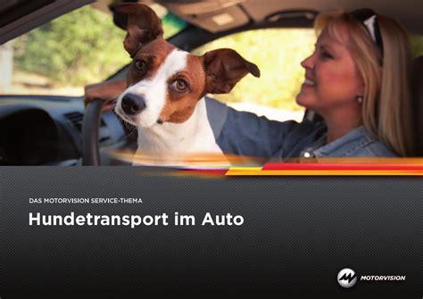 hundetransport im auto hundereisenmehr