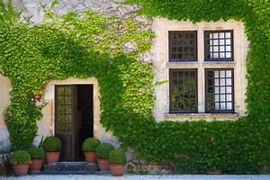 Artikel Von Haus : efeu an der hausfassade gr ne isolierschicht f r ihr ~ Lizthompson.info Haus und Dekorationen