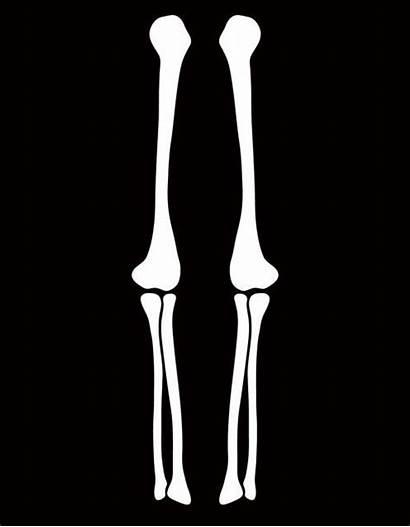 Halloween Skeleton Arm Costume Template Leg Clipart