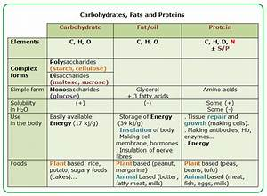 #29 Main nutrients: carbohydrates, fats and proteins ...