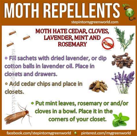 Getting Rid Of Pantry Moths Naturally Pin By Stepin2 On Diy Pest And Bug Repellents Tips