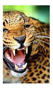 4K Animal Wallpapers - Top Free 4K Animal Backgrounds ...