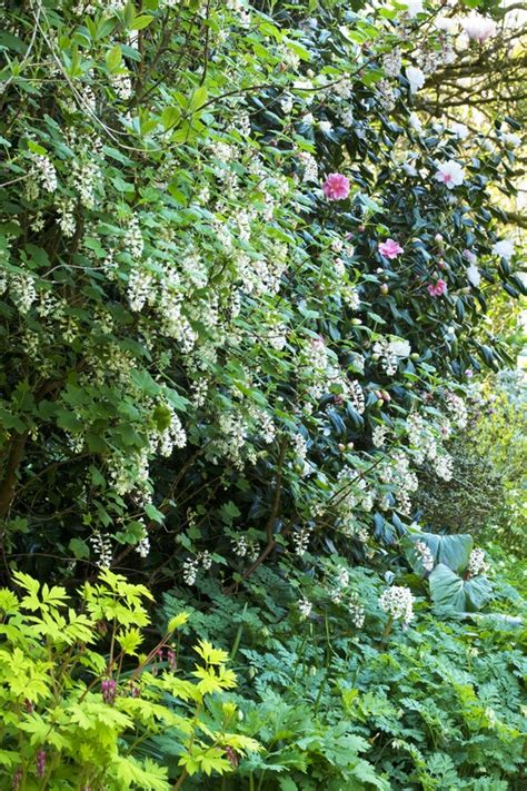 bushes for shade shrubs for areas with high shade