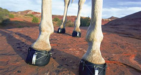 Best Hoof Boots Hoof Boots Hit The Trail America S Top Trail And