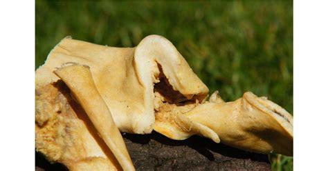 natuerliche rinderkopfhaut goldgelb  kaufen im
