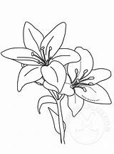 Lilies Easter Template Printable sketch template