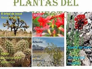 Imagenes De El Desierto De Las Plantas Pictures to Pin on Pinterest ThePinsta