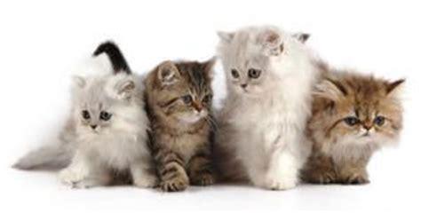 gatos todos sobre sus cuidados comportamiento  razas