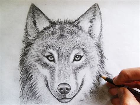wolf images drawings wolf drawing  mcorderroure