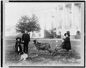 The Pets in the Benjamin Harrison White House - America ...